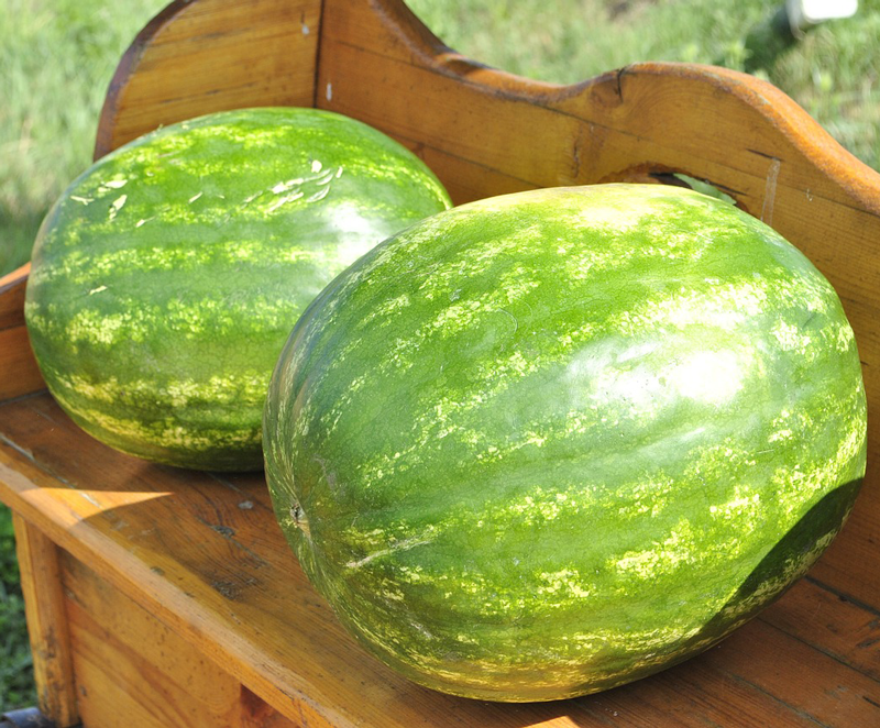 VegNews.Watermelon4