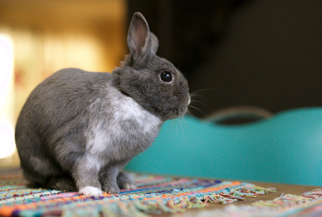 VegNews.Bunny