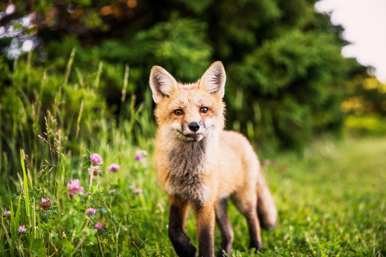 VegNews.Fox5
