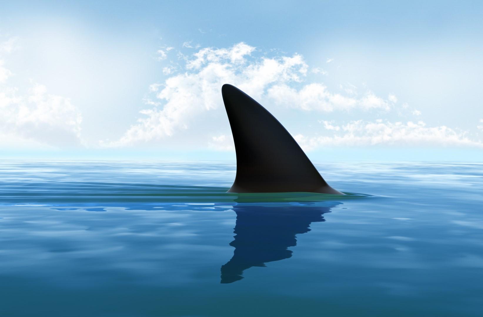 VegNews.SharkFin