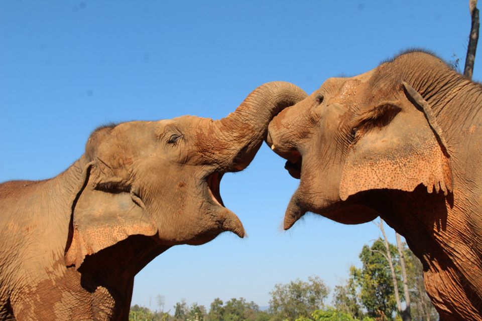 VegNews.ElephantSanctuary4
