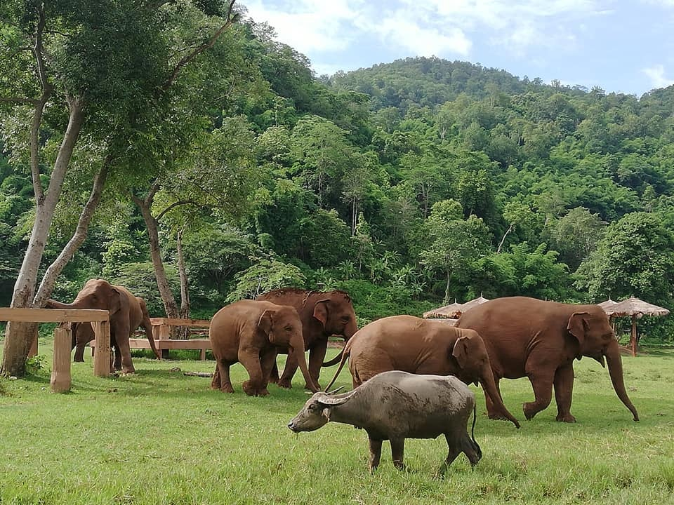 VegNews.ElephantSanctuary7