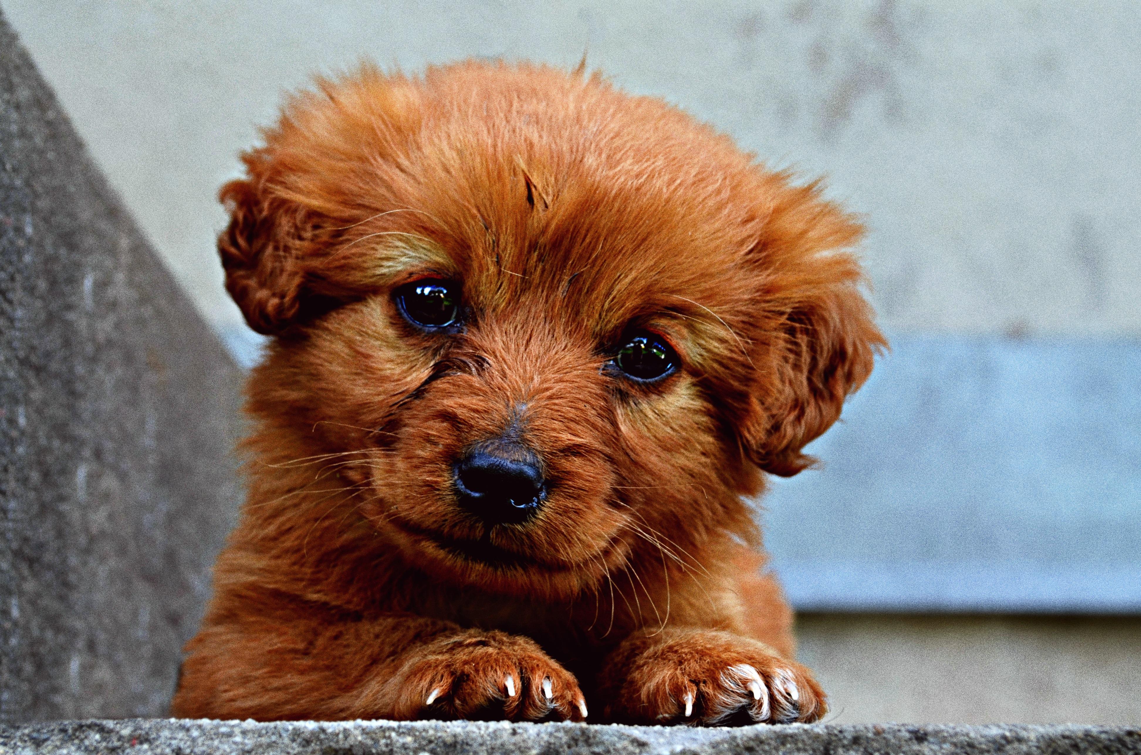VegNews.Puppy