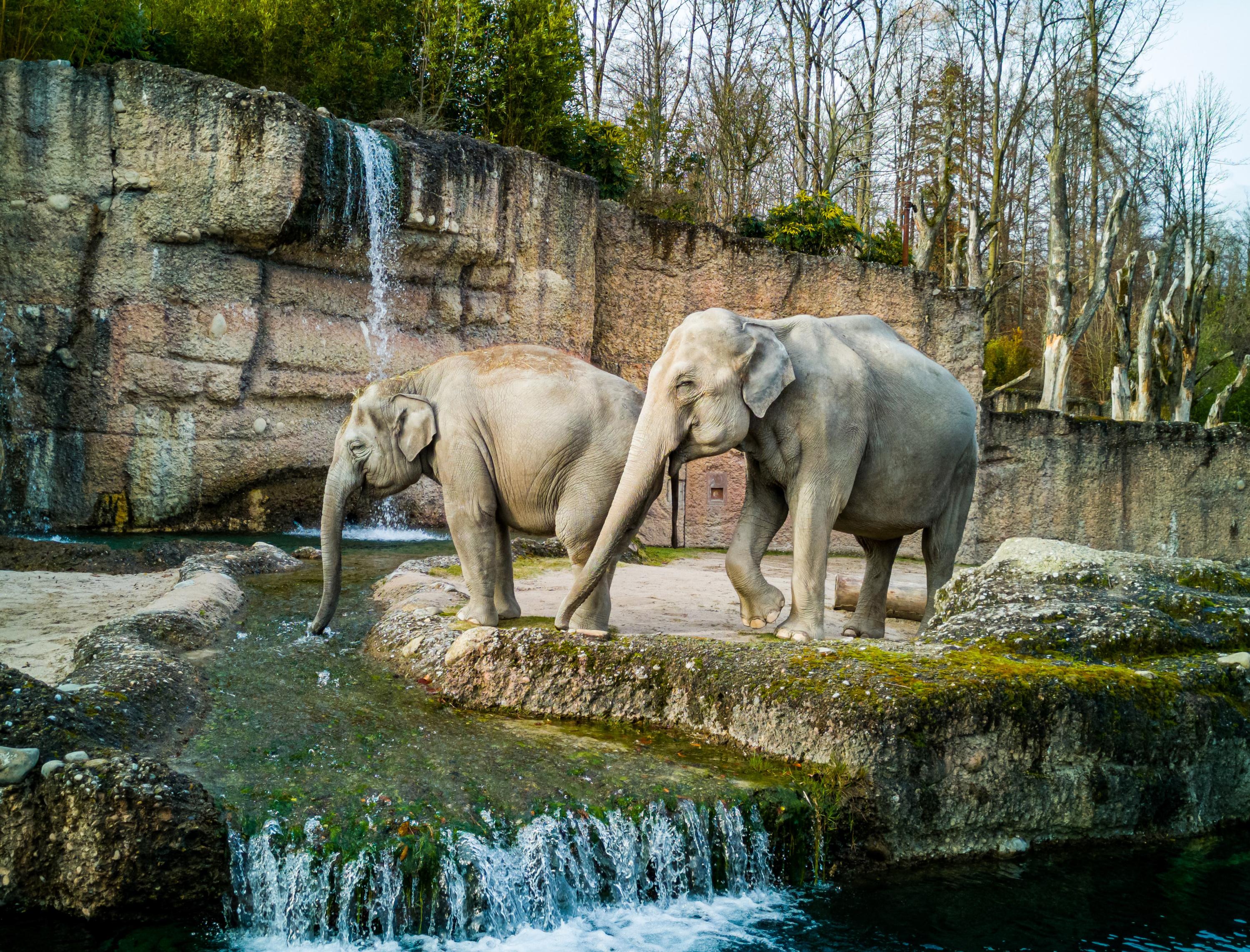 VegNews.ElephantZoo