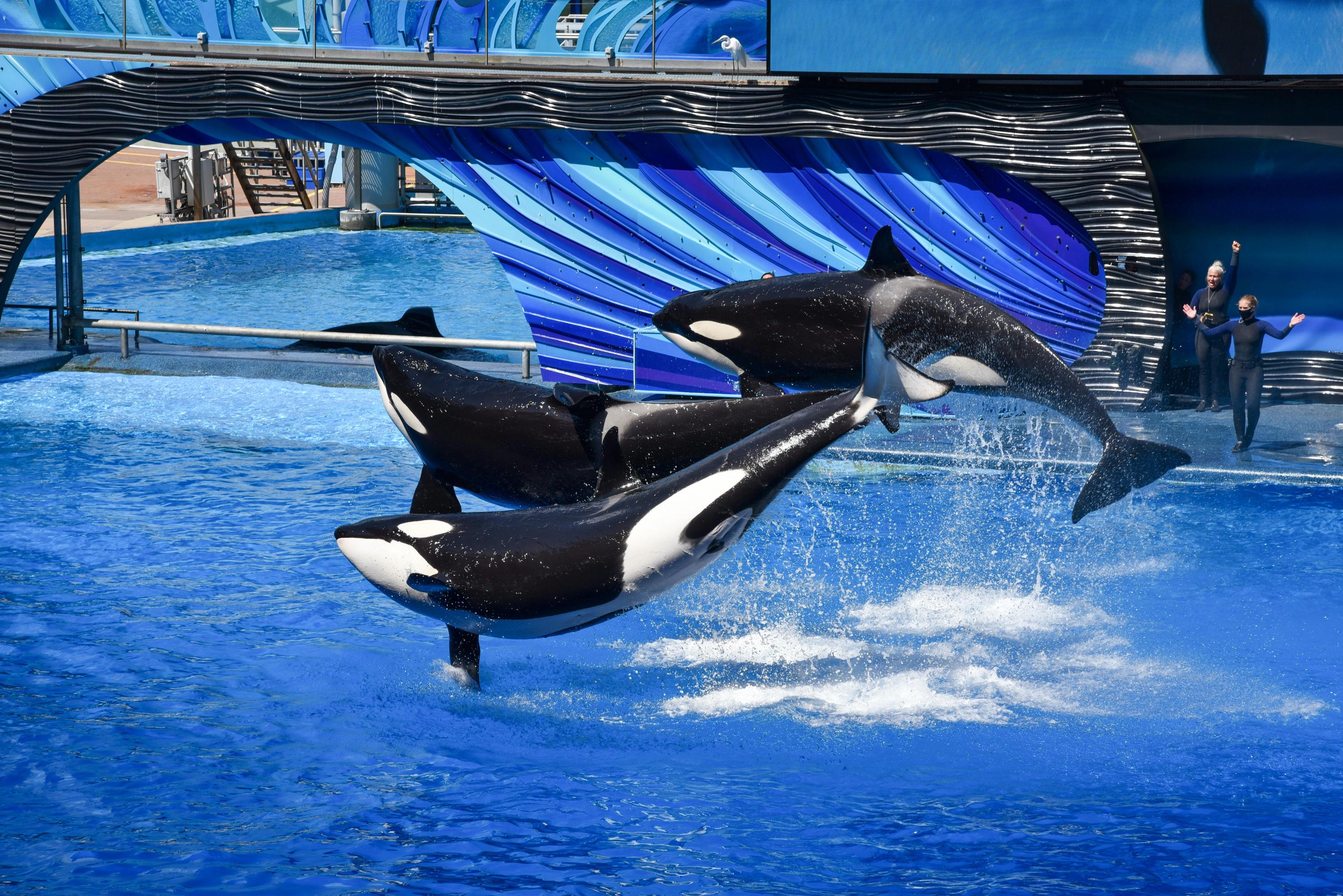 VegNews.OrcasSeaWorld