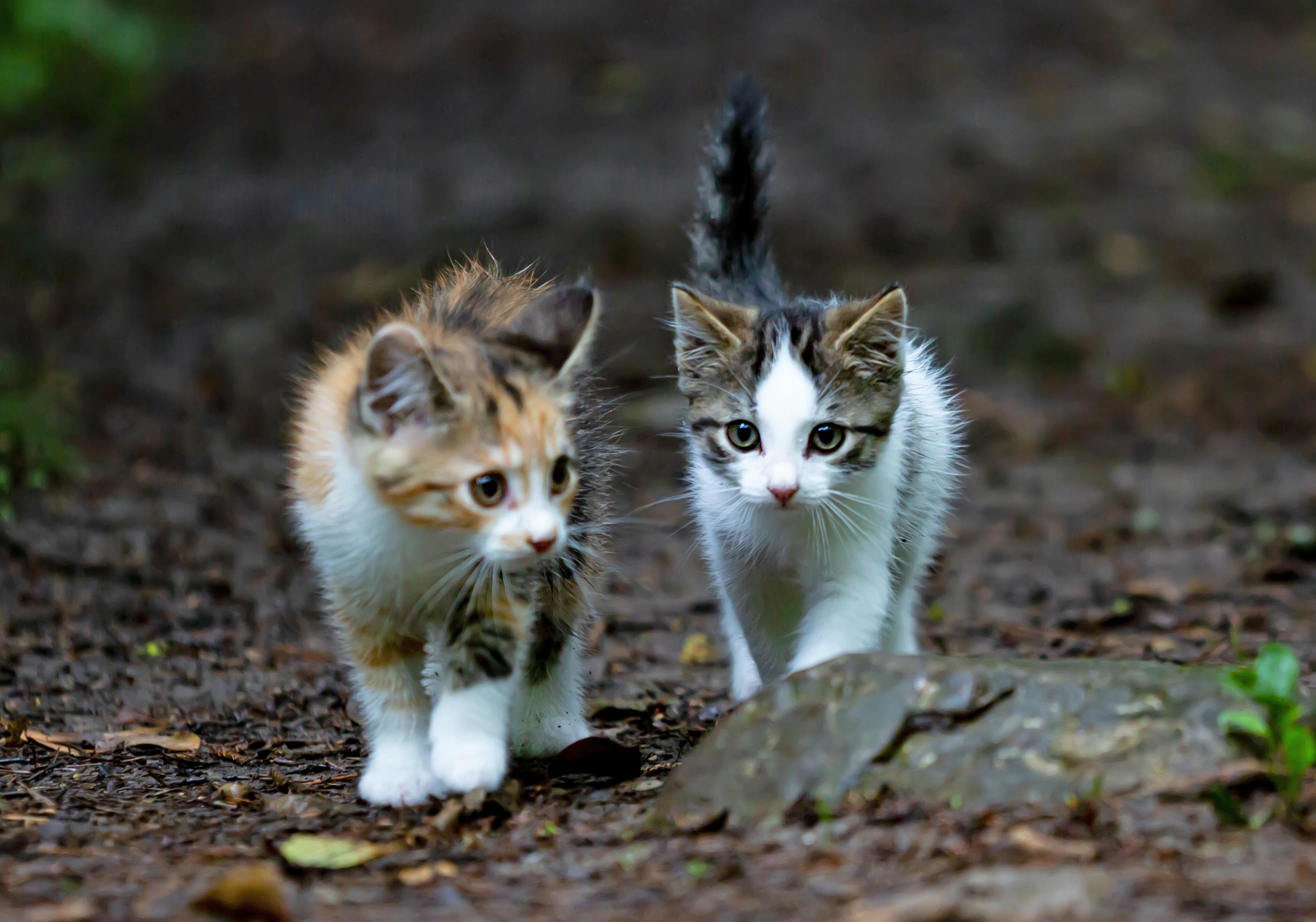 VegNews.Kittens3