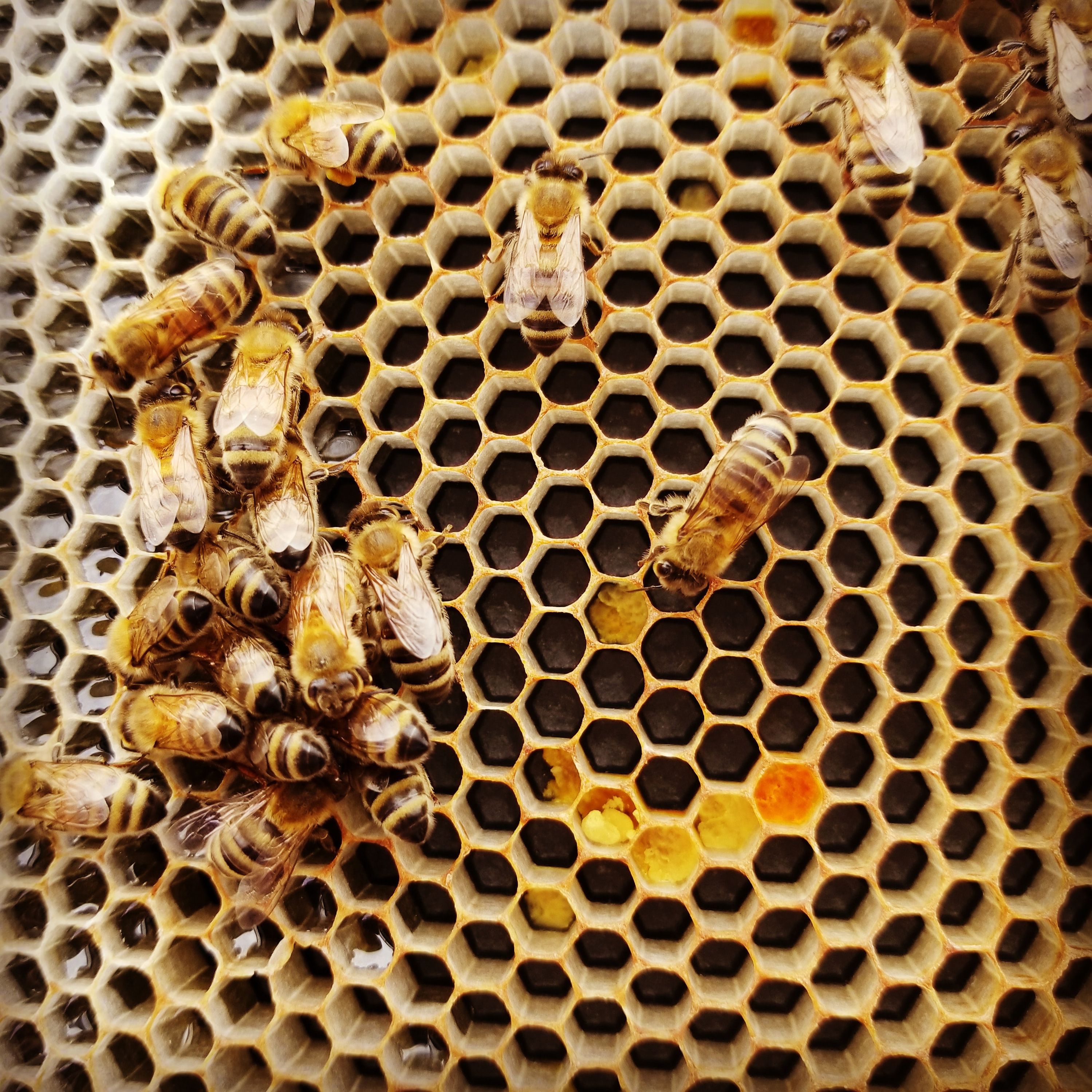 VegNews.BeesHoneycomb