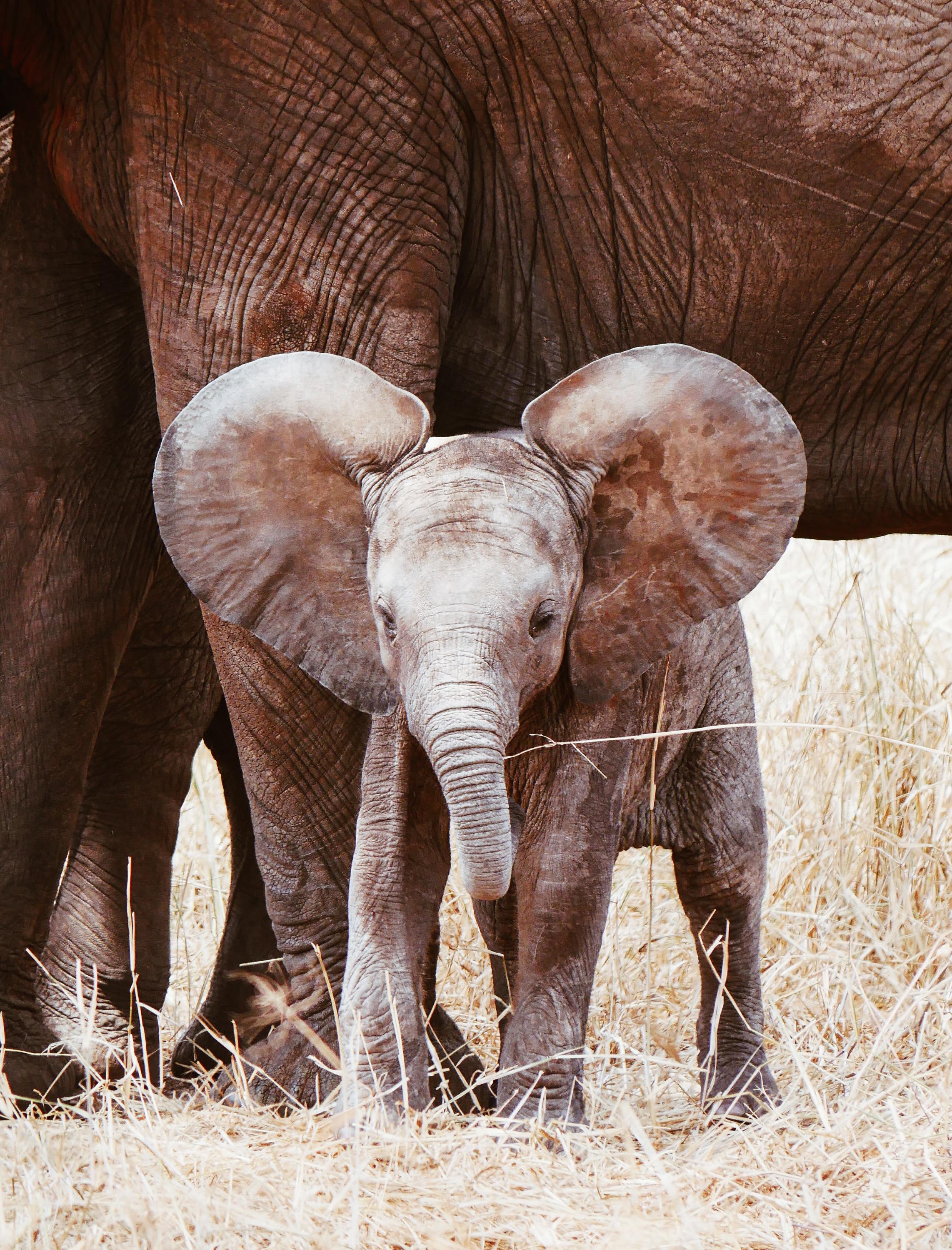 VegNews.ElephantBabyGoogle