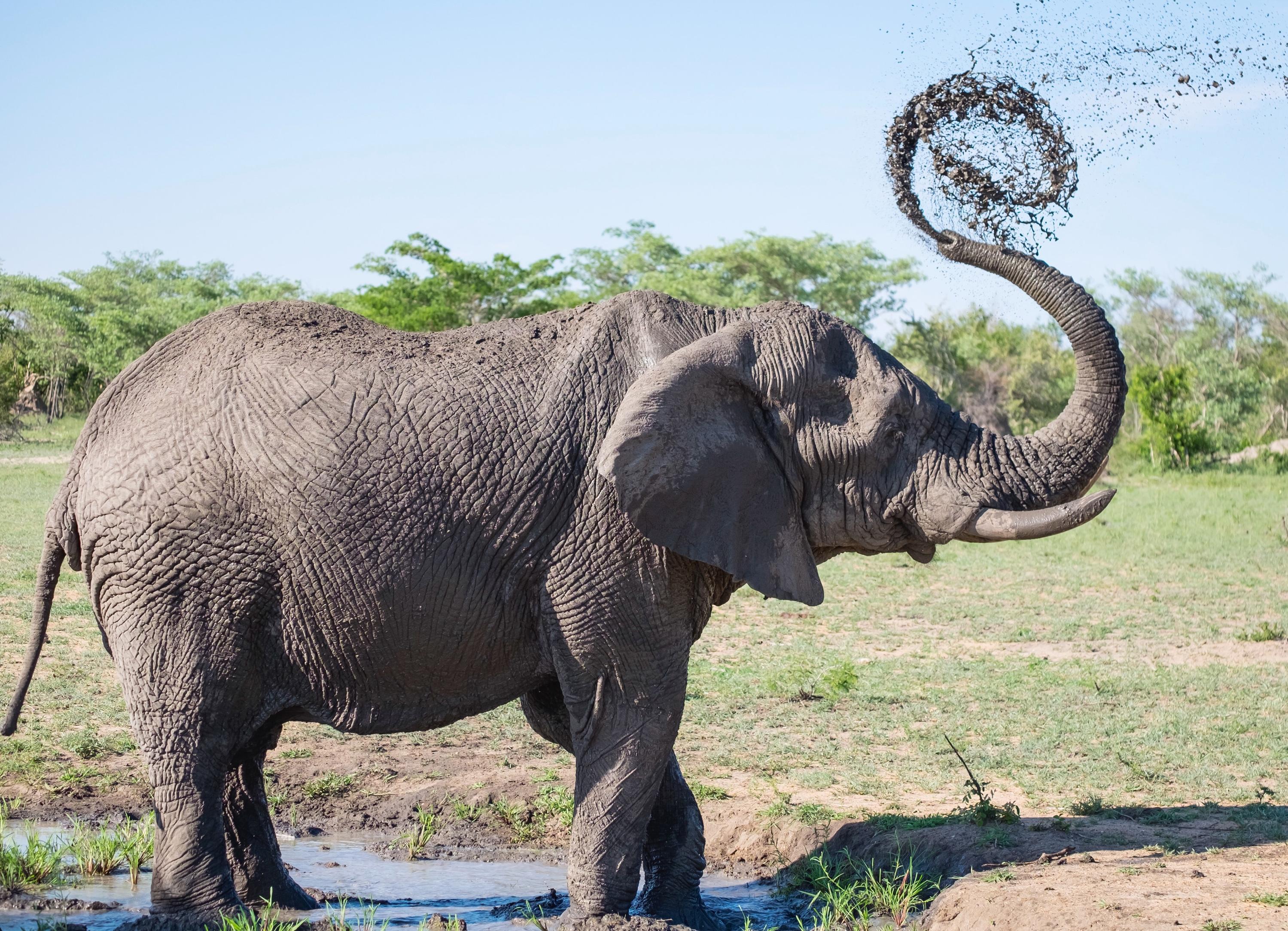 VegNews.ElephantGoogle
