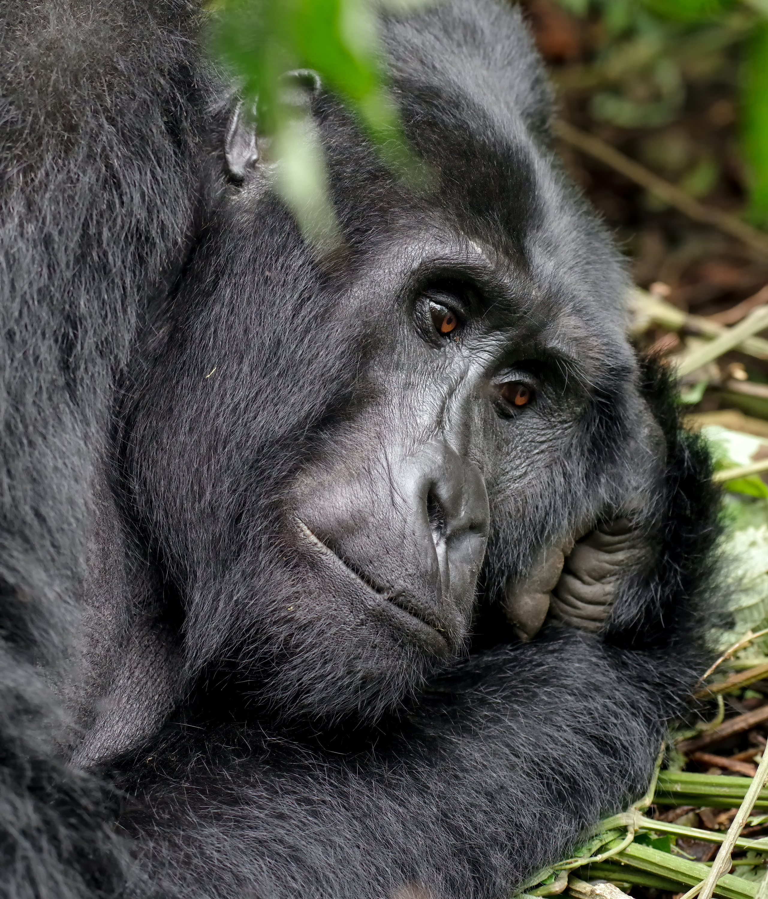 VegNews.Gorilla2