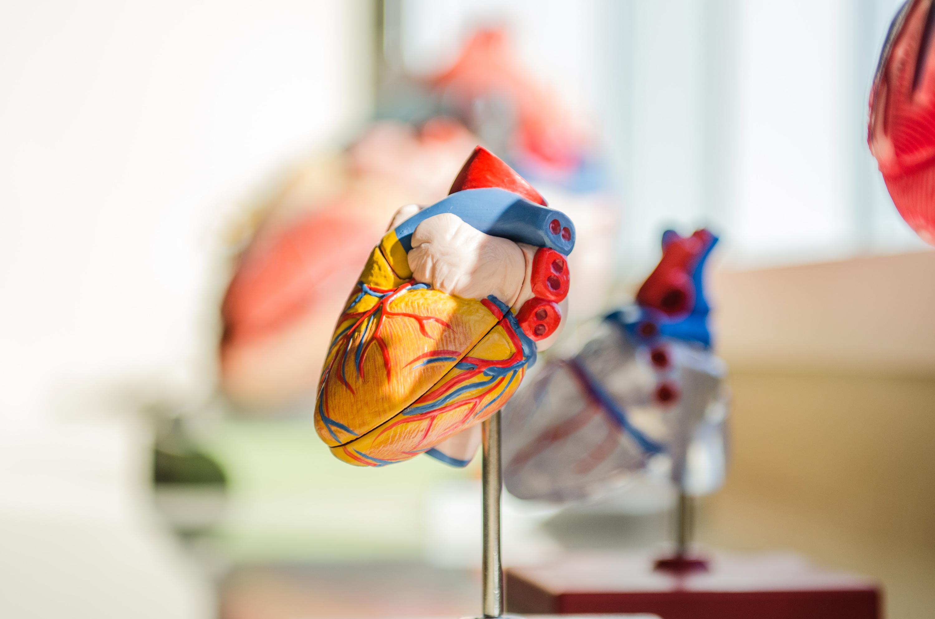 VegNews.HeartModelDisease