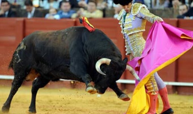 the-bullfighting