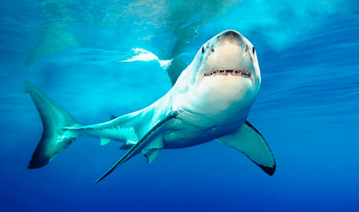 The US Senate Just Passed a Ban on Shark Fin Sales