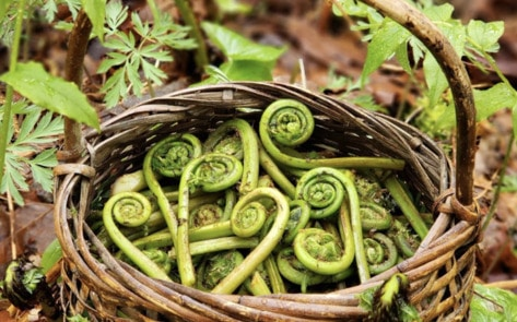 Vegan Backyard Foraging: 7 Simple Steps to Start Today