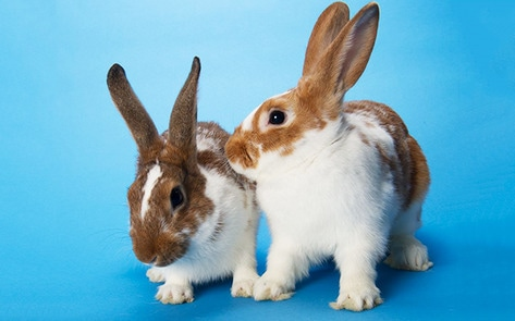 Nevada Bans Cosmetic Animal Testing