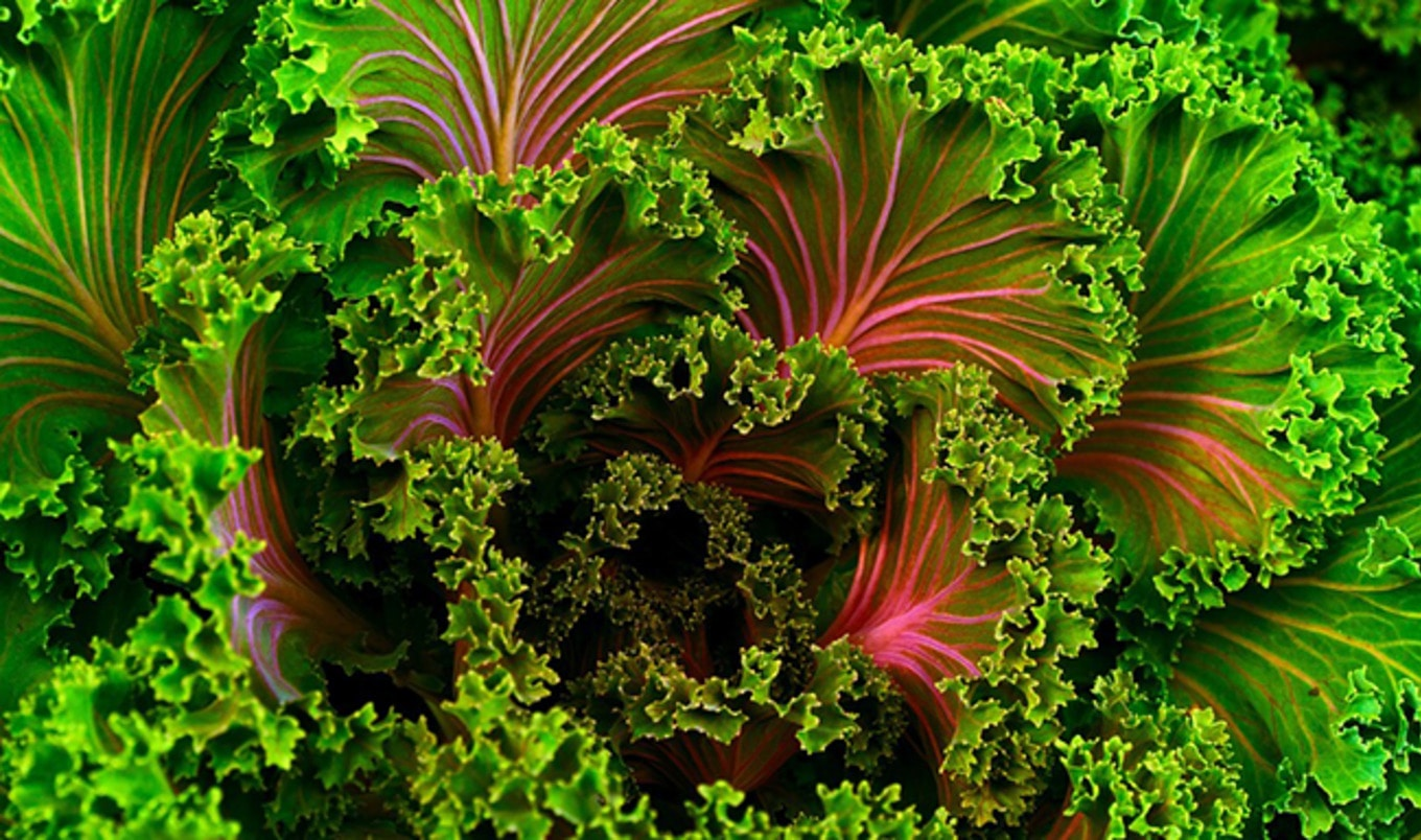 Organic Kale Now $1 Per Bunch at Whole Foods