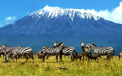 First All-Vegan Kilimanjaro Trek Begins in February