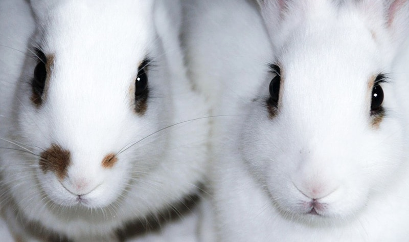 Congress Probes EPA\'s Cruel Animal Testing Program