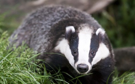 VegNews.Badger