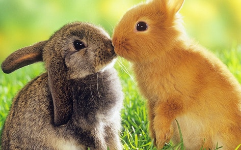 VegNews.Bunnies