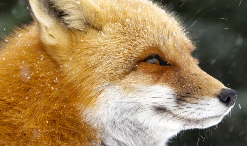 Chanel Bans Fur and Reptile Skin