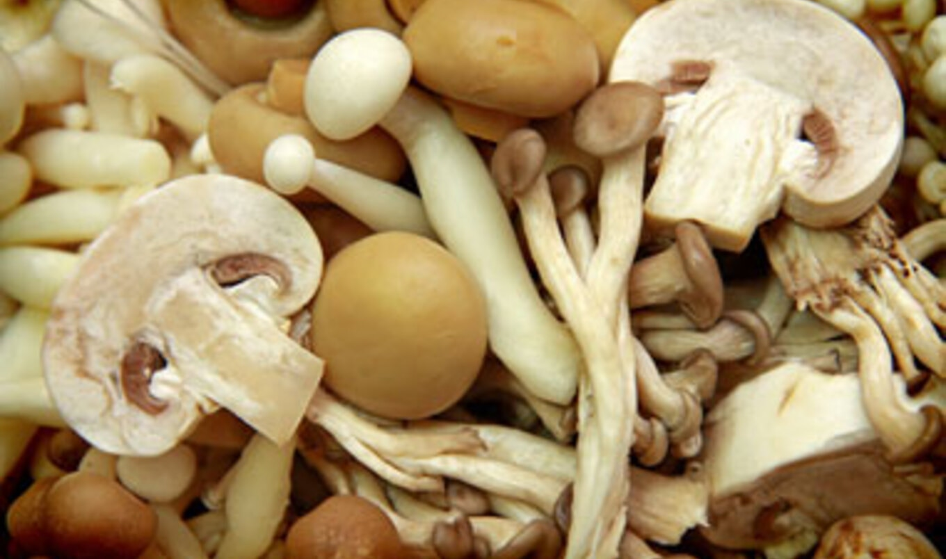 Research Shows Mushrooms May Be Replacing Meat