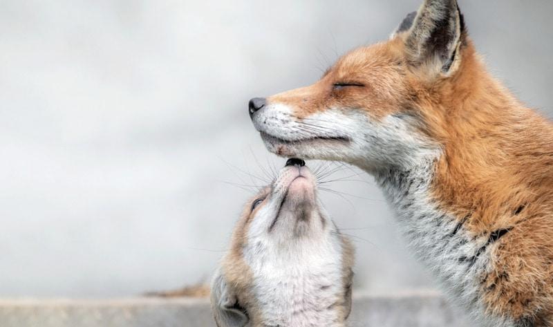 Hungary announces preemptive ban on fur farms