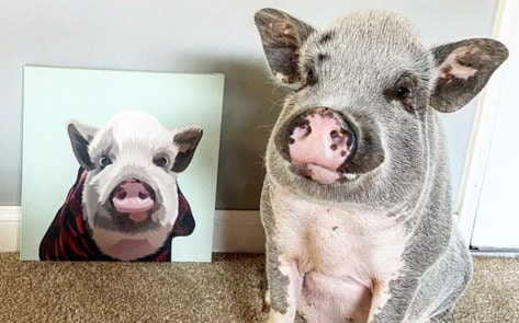 7 Adorable Vegan Animal Instagram Accounts To Brighten Your Day