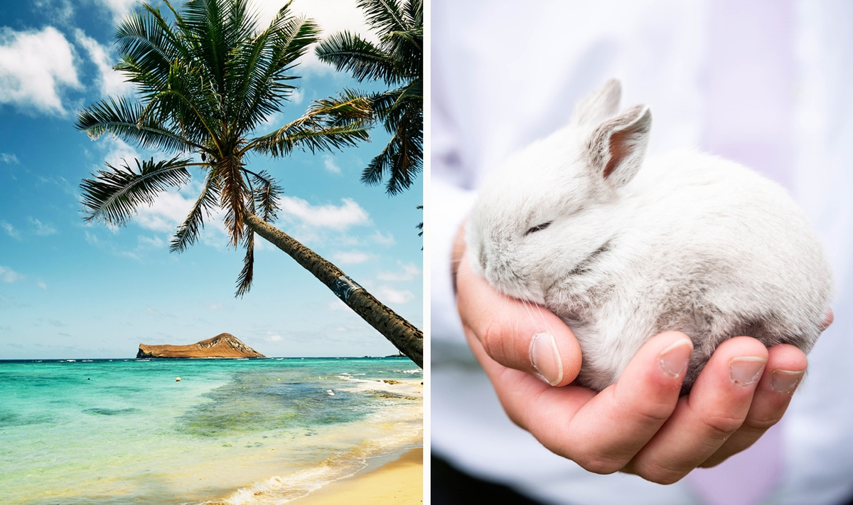 Hawaii To Become Sixth State to End Cosmetic Animal Testing
