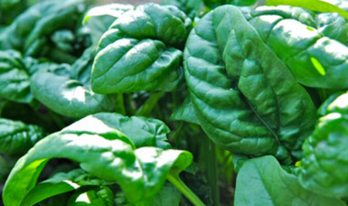VND.Spinach