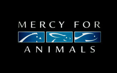 ColleenHolland.MercyForAnimals