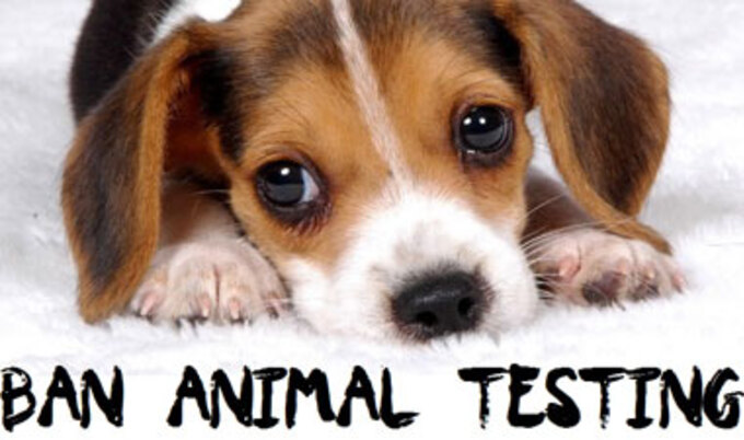 VegNews.BeagelAnimalTesting