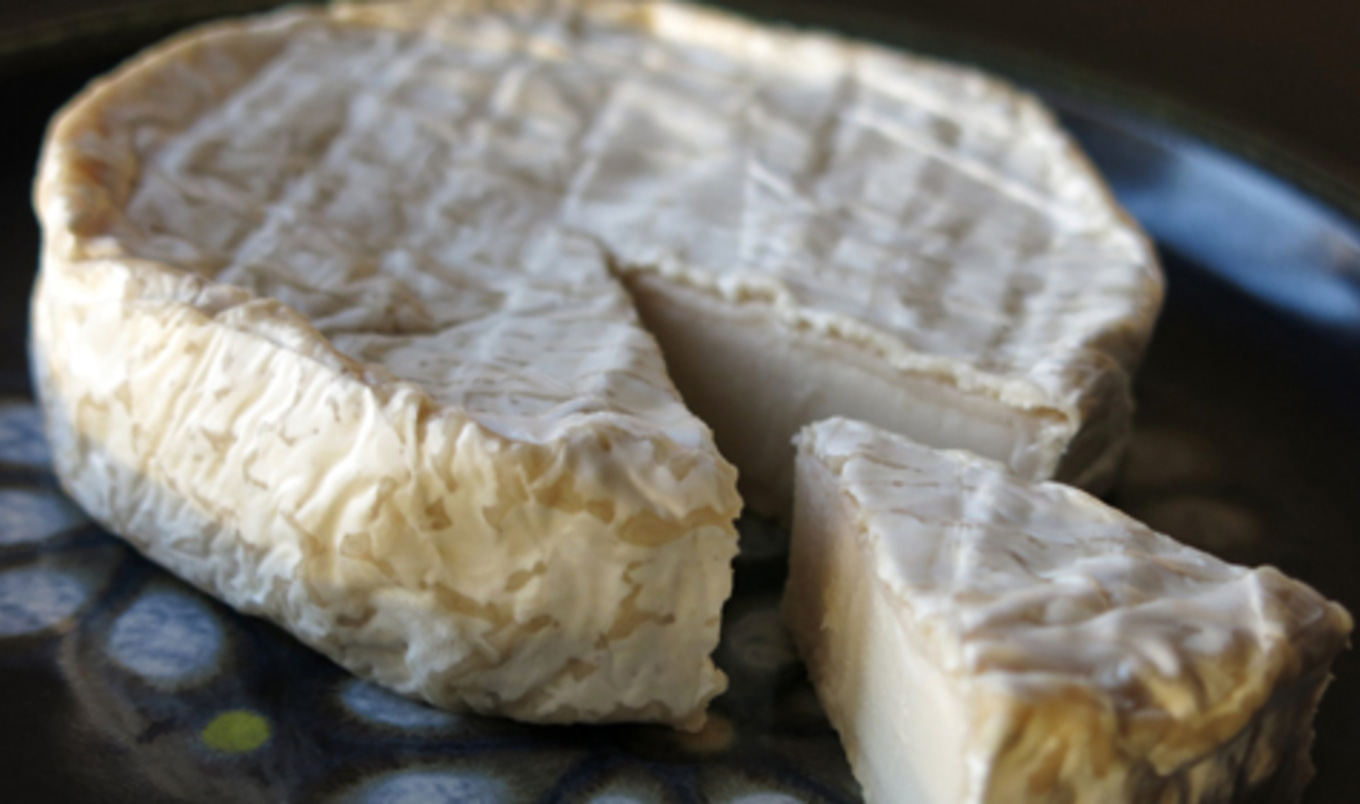 Vegan Cheese Brand Launches Fundraising Campaign