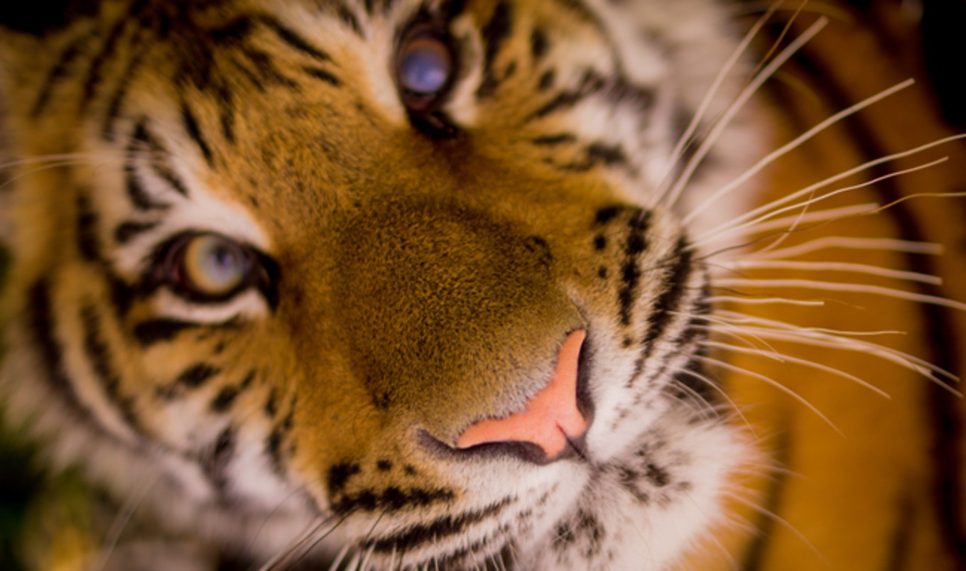 275th City in Spain Vote to Ban Animal Circuses