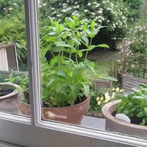 VND.windowsill.herb.garden