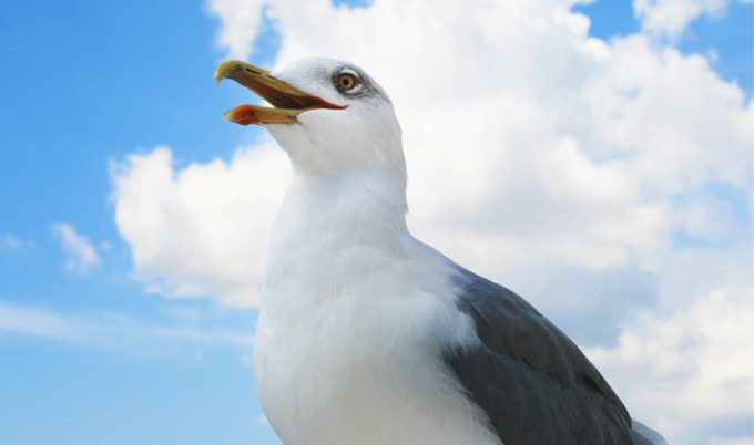 62 Soy-Eating Seagulls Rescued From Tofu Factory