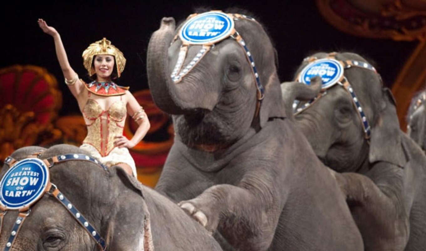 Jersey City Moves to Ban Use of Animals in Circuses, Parades