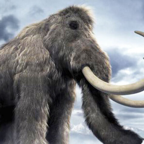 Woolly Mammoth: First Protected Extinct Species?