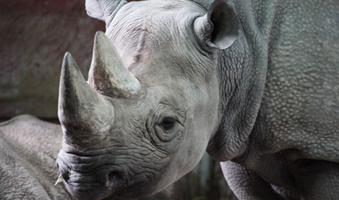 VegNews.BlackRhino