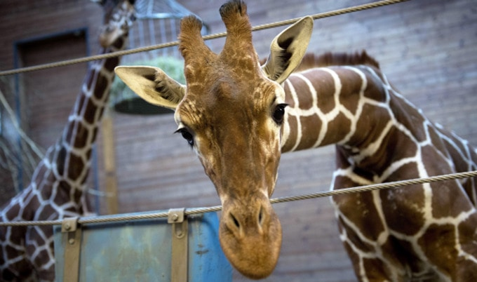 Major Zoo to Close After 140 Years, Release 2,500 Animals