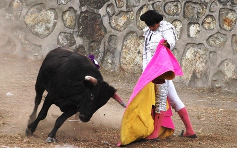 VegNews.Bullfighting