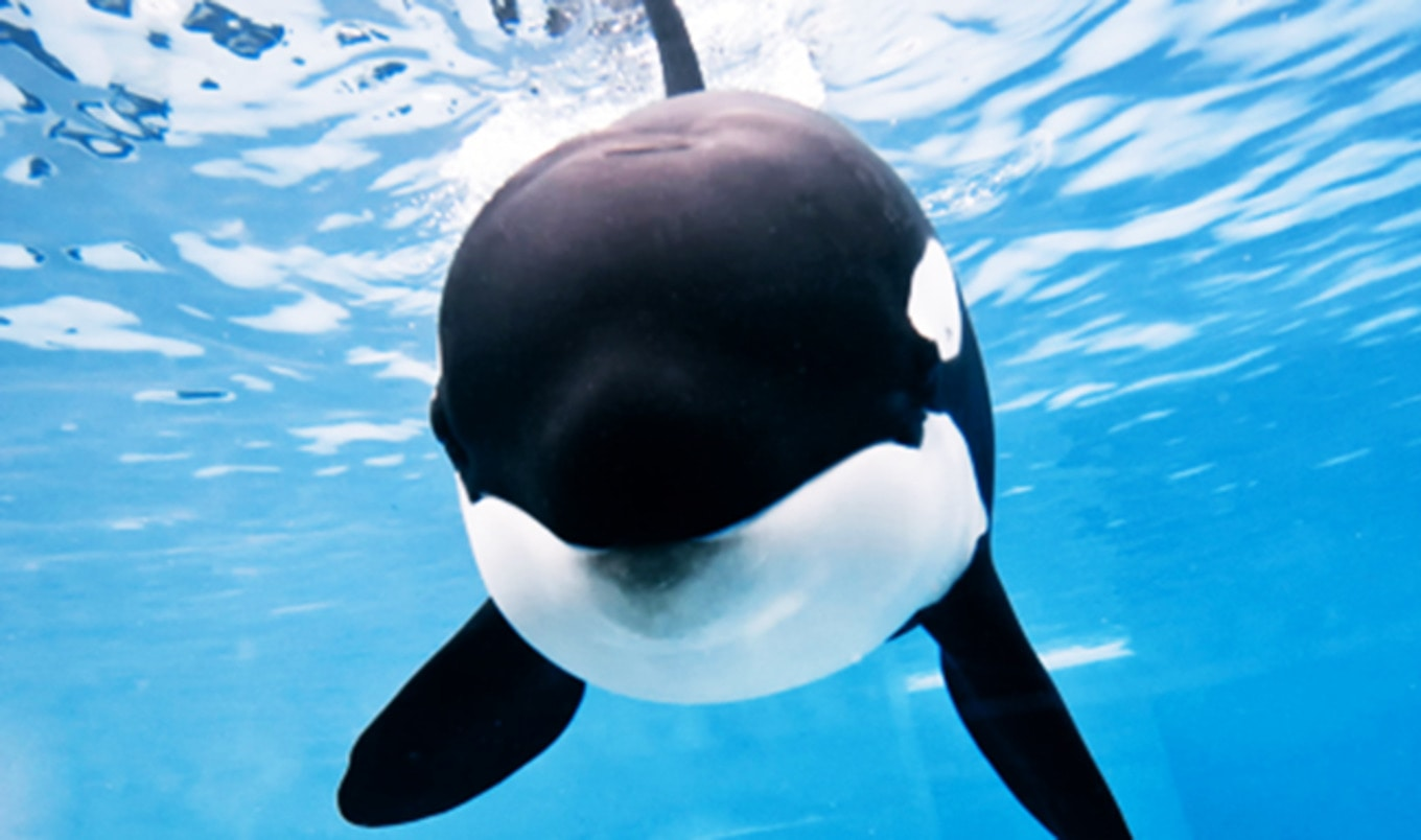 SeaWorld CEO Resigns as Profits Continue to Plummet