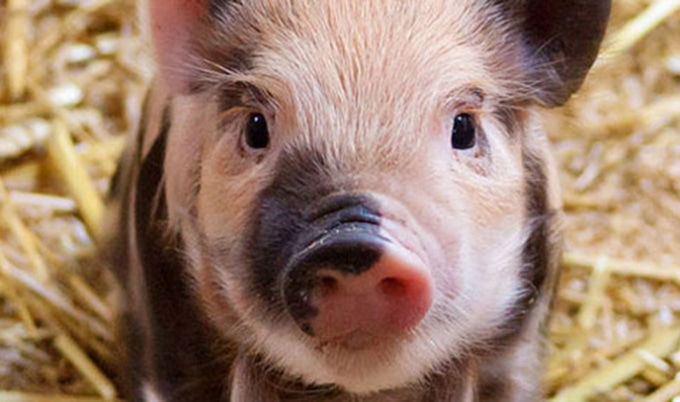 Arkansas Close to Passing Egregious Ag-Gag Bill