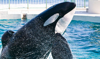 CNN Documentary Blackfish Makes Oscar Shortlist