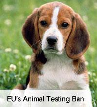 EU Testing Ban