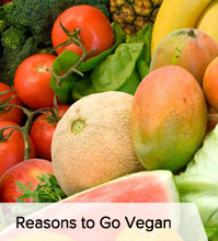 Reasons Vegan