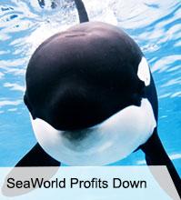 VegNews.SeptNewsletter.SeaWorld.jpg