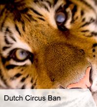 VegNews.OctoberNewsletter.NetherlandsCircuses.png