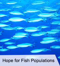 VegNews.FishPopulations