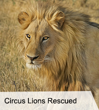 VegNews.Lions